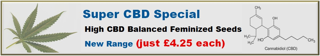 Super High CBD Special Click here to view Cannabis Strains in our new range of high Cannabinoid marijuana seeds