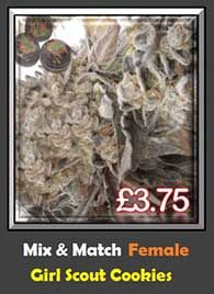 Girl Scout Cookies Mix and Match Single Feminised Pot