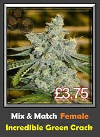 Incredible Green Crack Mix & Match Feminized Pot Seeds For Sale Big Yield