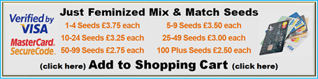 Pick and Mix & Match Single NYC Diesel Kush Female Ganja Strain Bulk Buy Discount Skunk Seeds
