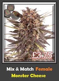 Monster Cheese Pick n Mix Weed Seeds - Fresh or 50% OFF Highest Yielding