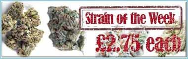 Strain of the Week weekly Marijuana Seeds sale with cannabis strains 33% Discounted
